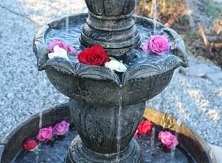 Fontena, og blomstring i hagen