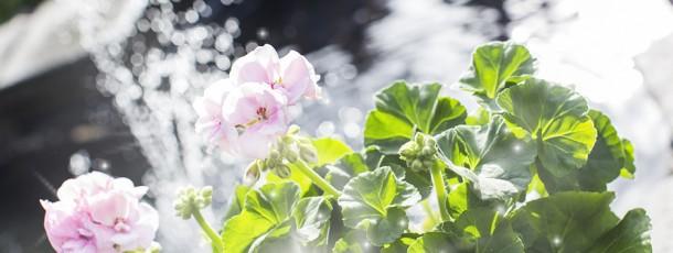 { klar for våren… }