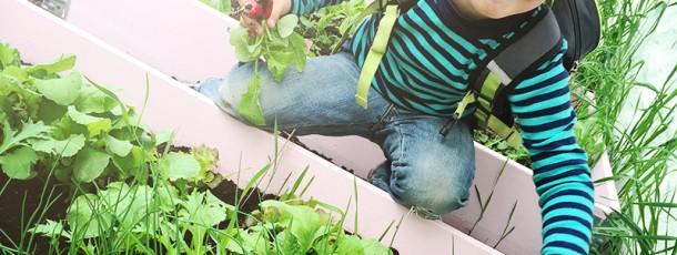 { Stas med grønnsakshagen // første innhøsting }