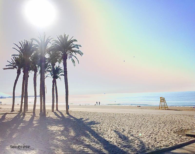 stranda palmer hav